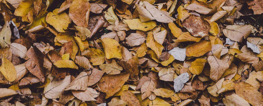 Photo of a orange, brown fallen leaves