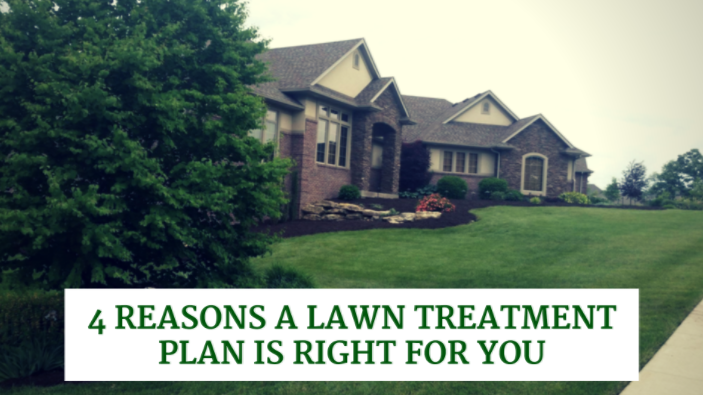 4 reasons lawn treatment is right for you