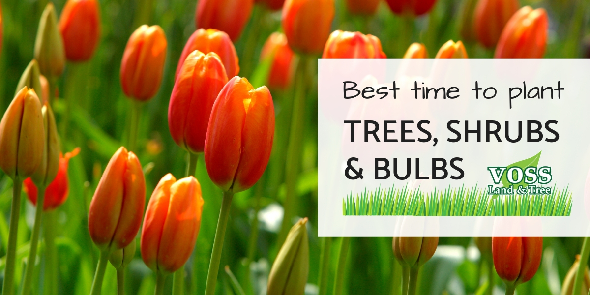 The best time to plant trees shrubs and bulbs in MO
