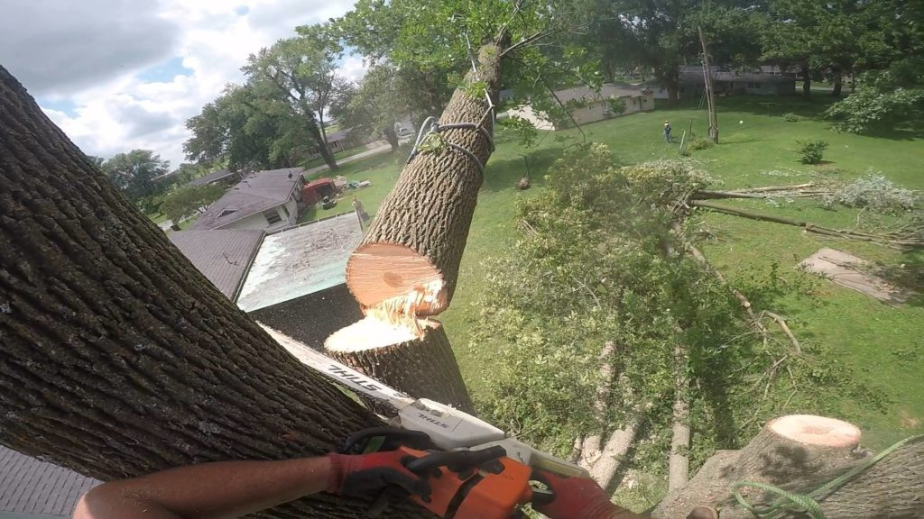Tree and Stump Removal in Columbia Missouri