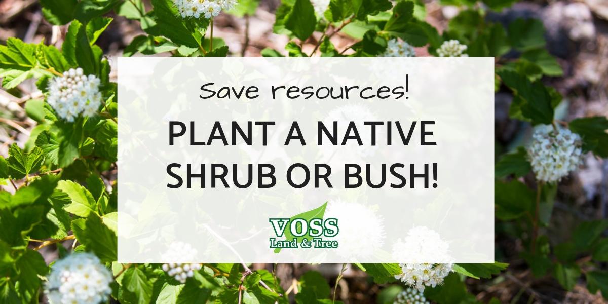 Plant a Native Shrub or Bush in Missouri